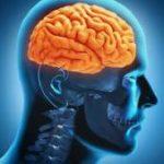 Что происходит с мозгом человека, когда он скучает